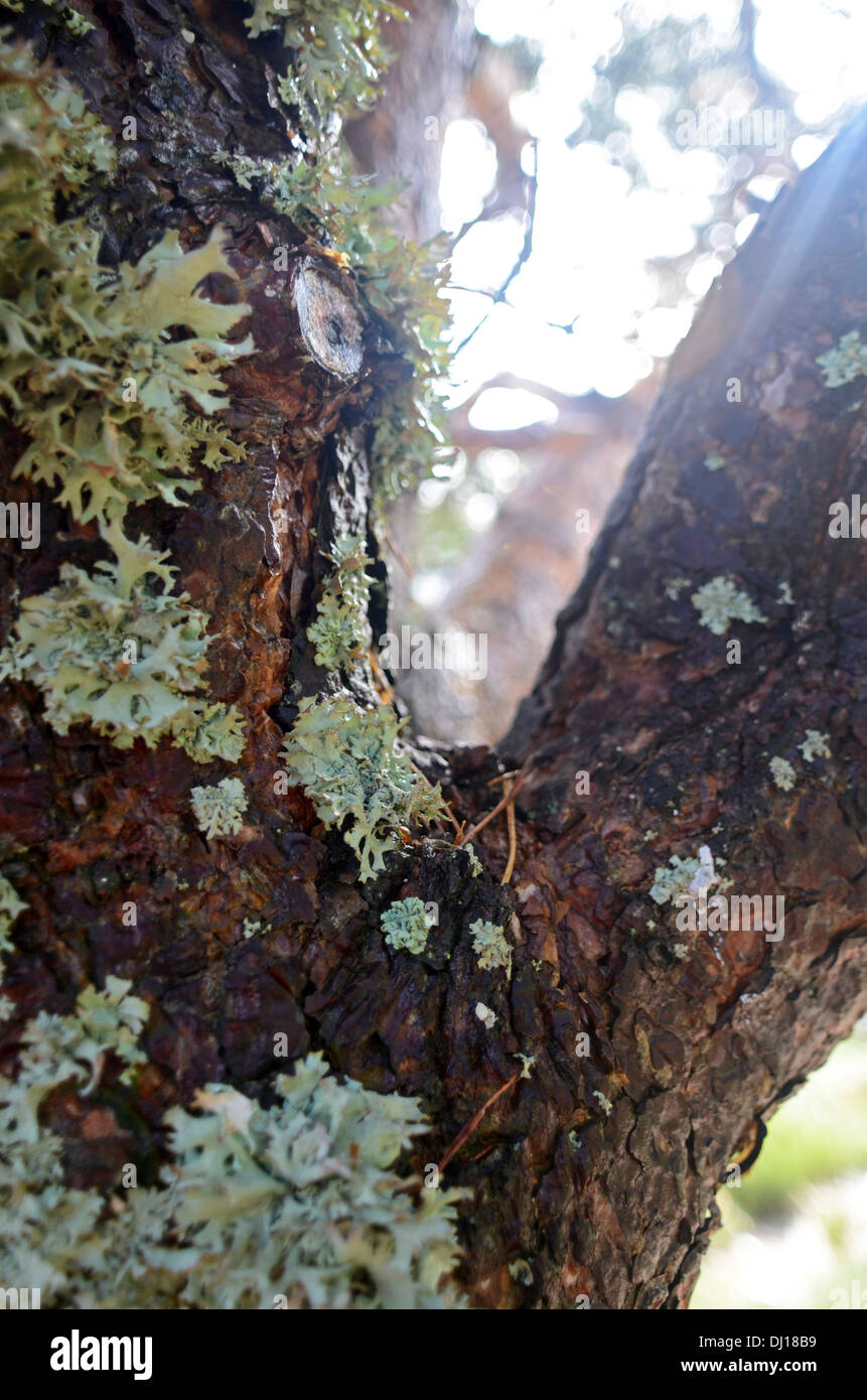Forest in Peñalara, highest mountain peak in the mountain range of Guadarrama, Spain Stock Photo