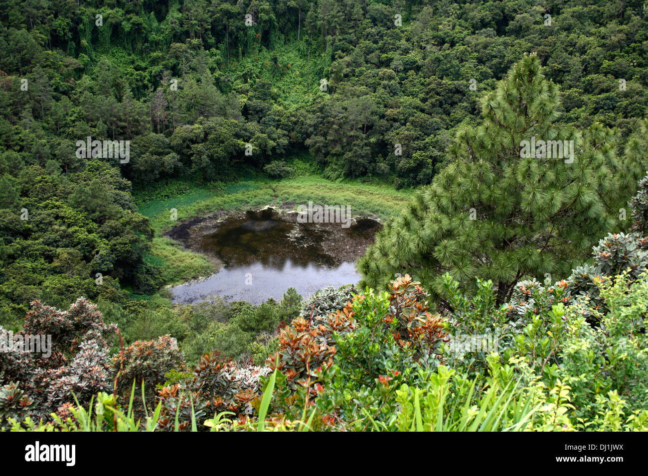 View of the dormant crater of Trou aux Cerfs in Mauritius - Stock Image