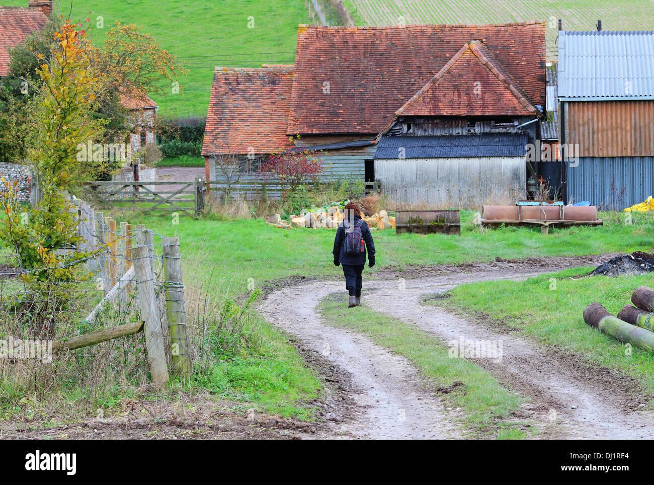 Lady Rambler on an English Rural Track through a Farmyard - Stock Image