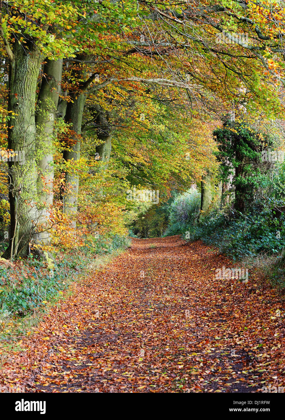 Leafy Track Stock Photos Amp Leafy Track Stock Images Alamy