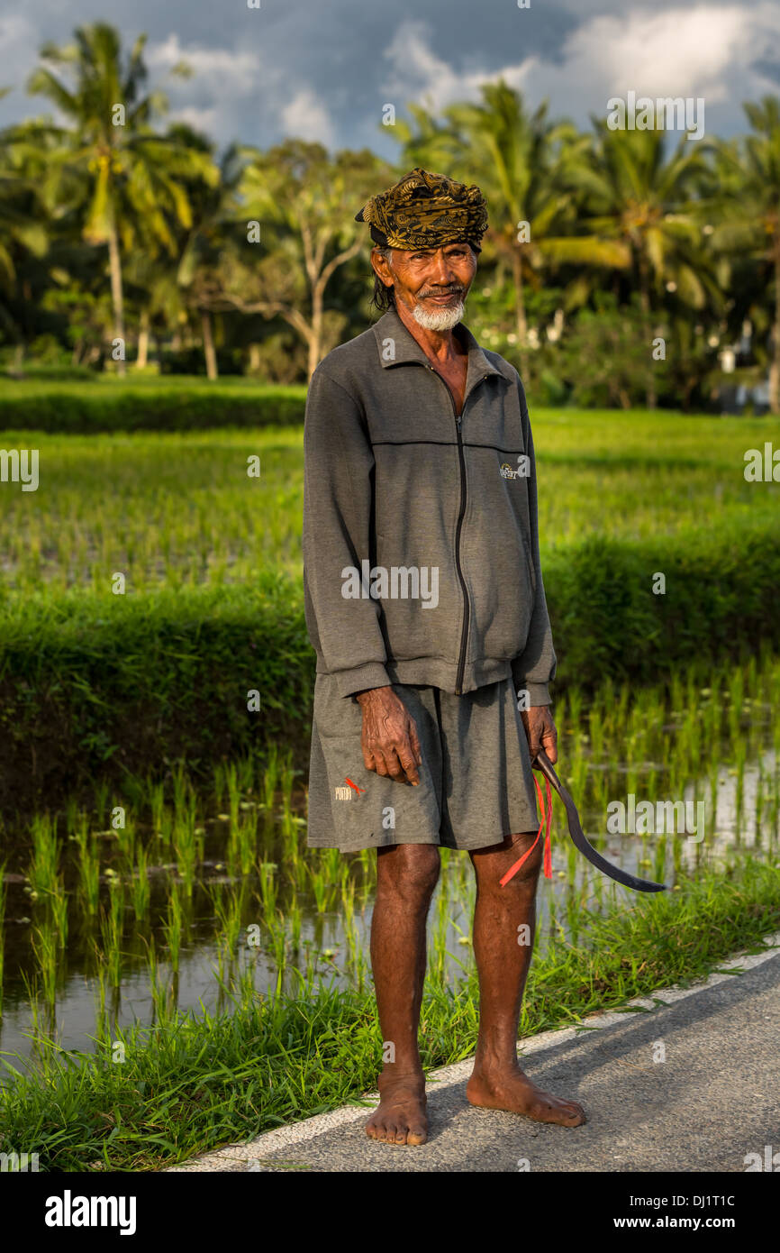 Elderly rice farmer wearing a head scarf, Ubud district, Bali, Indonesia, Asia - Stock Image
