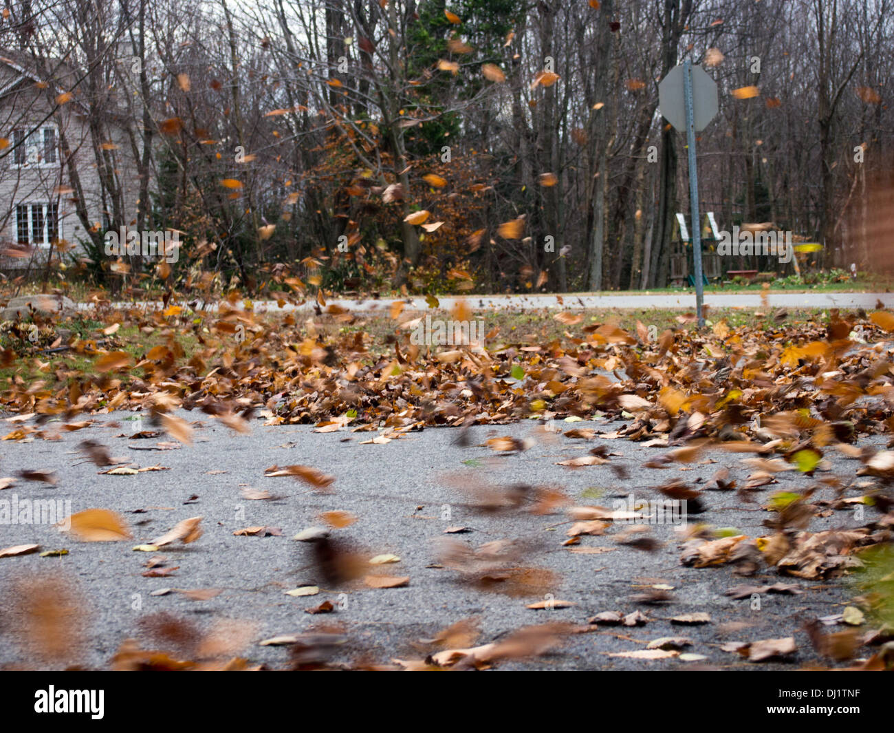 Leaves Blowing High Resolution Stock Photography And Images Alamy