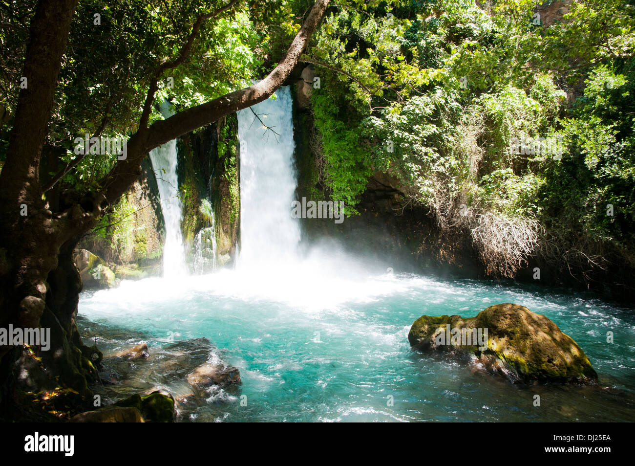 Hermon Stream Nature reserve (Banias) Golan Heights Israel This stream is one of the sources of the Jordan River - Stock Image