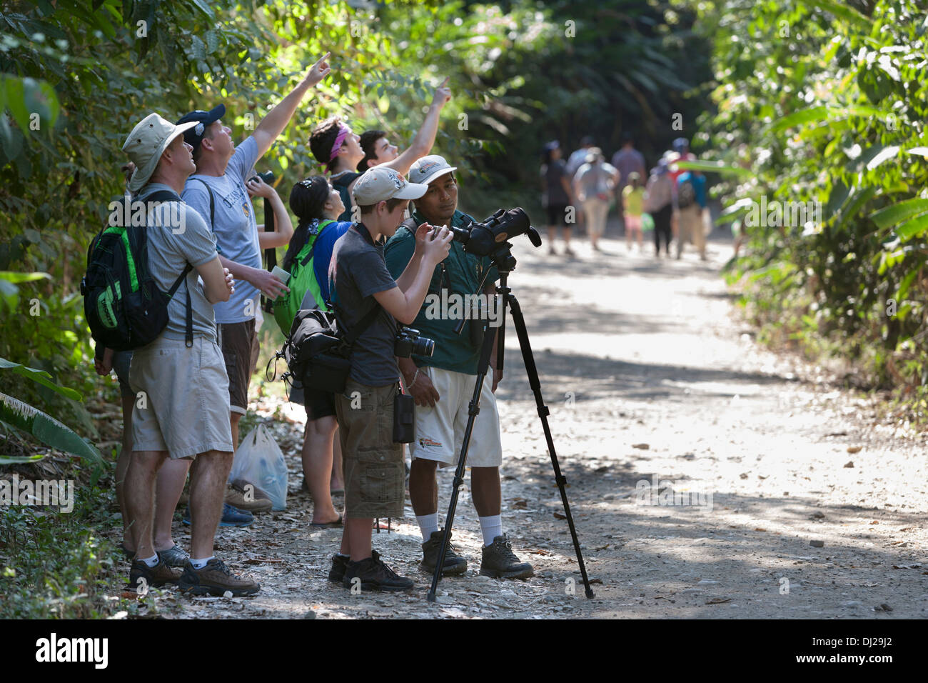 Tourists gather around a guide to get a look at the wildlife at the Manuel Antonio National Park in Costa Rica. Stock Photo