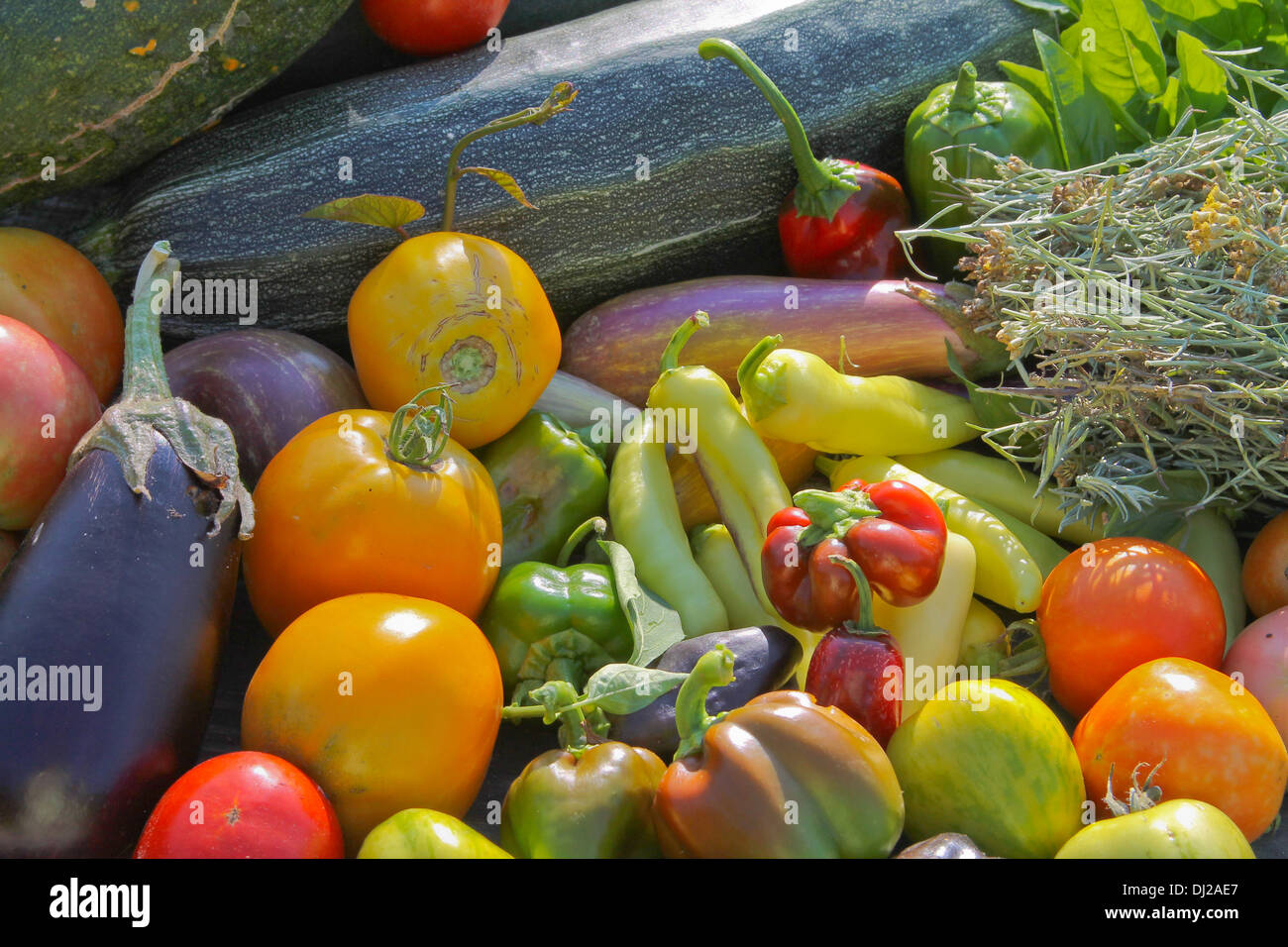 Horizontal orientation of Fall Harvest Vegetables - Stock Image