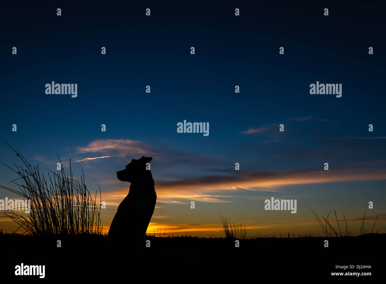 Dreaming dog at sunset - Stock Image