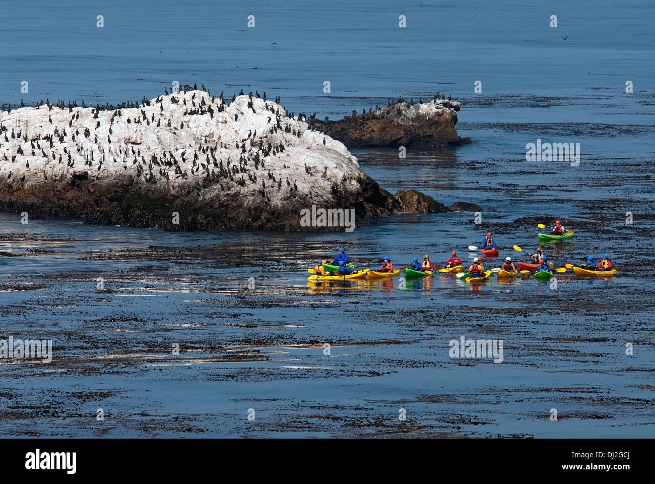 Kayaking near cormorant colony, California , USA - Stock Image