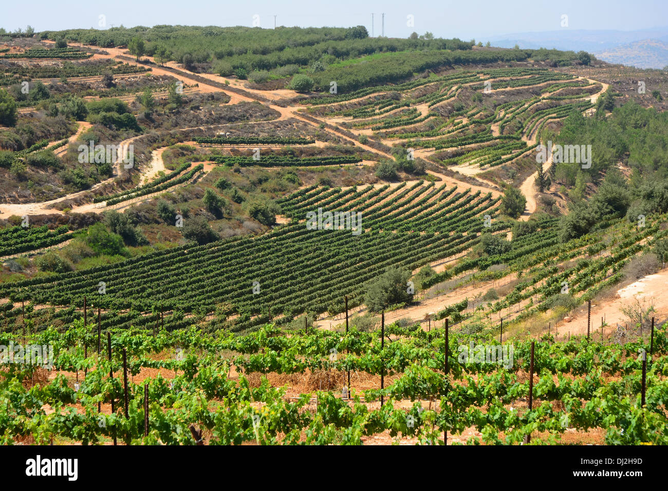 Vineyards on the hills of Gush Etzion, Israel - Stock Image