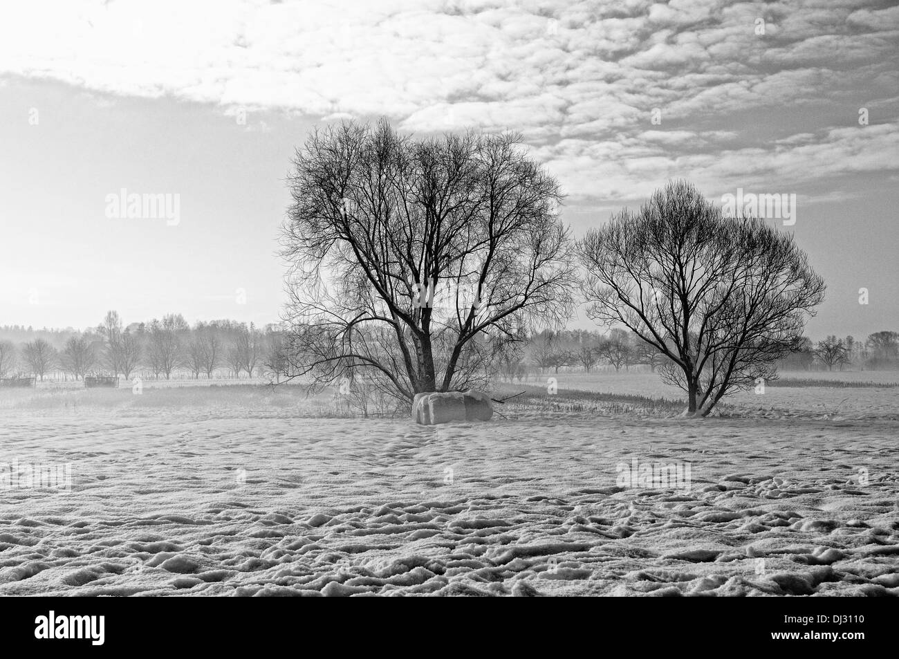 on cold winter mornings black and white - Stock Image
