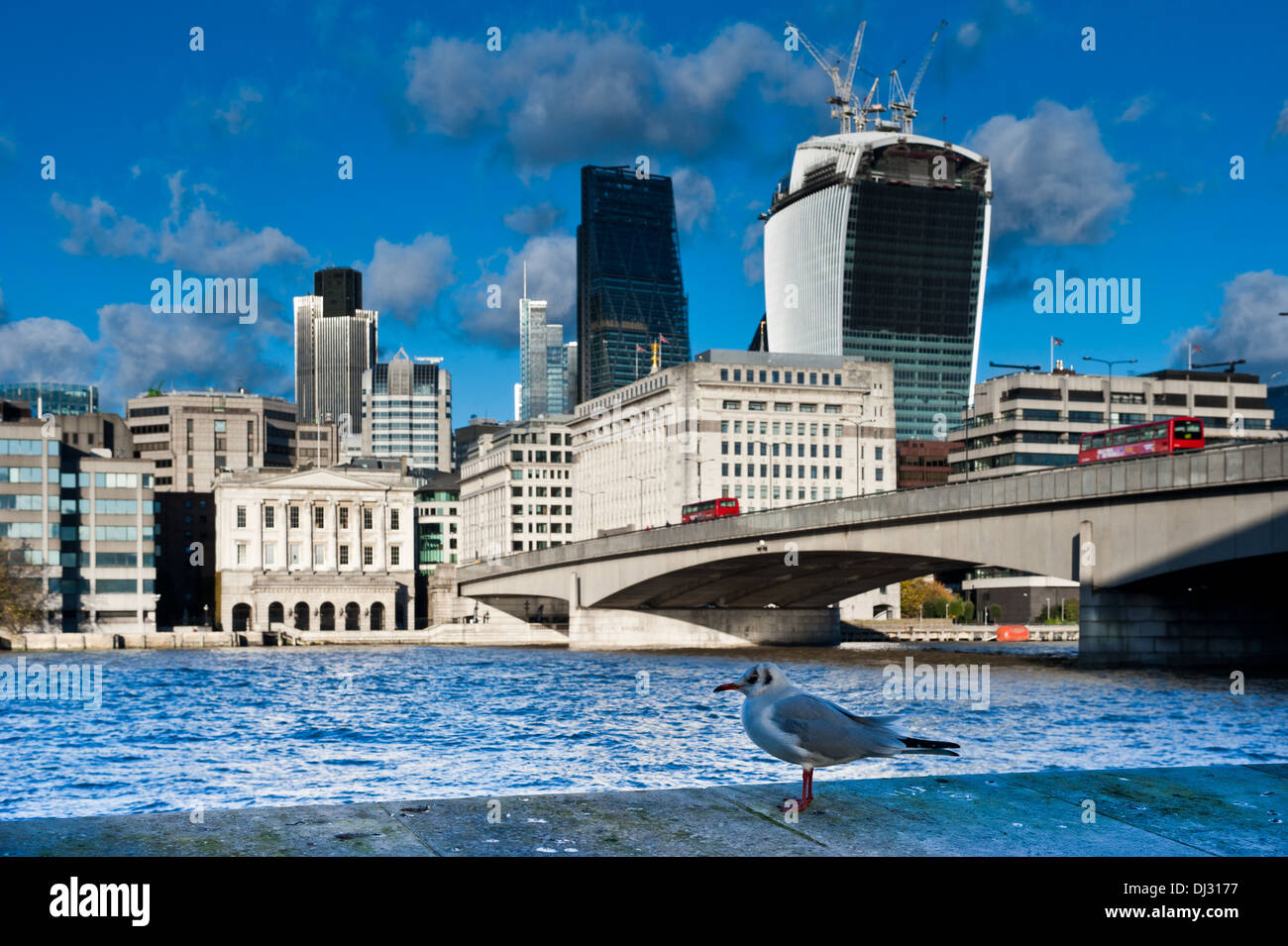 A seagull sits on the river bank of the Thames, facing the new London Skyline 2013 with skyscrapers of The City - Stock Image