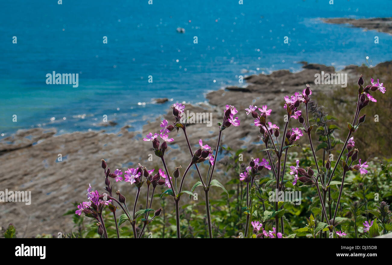 View of the sea at St. Mawes, Cornwall. - Stock Image