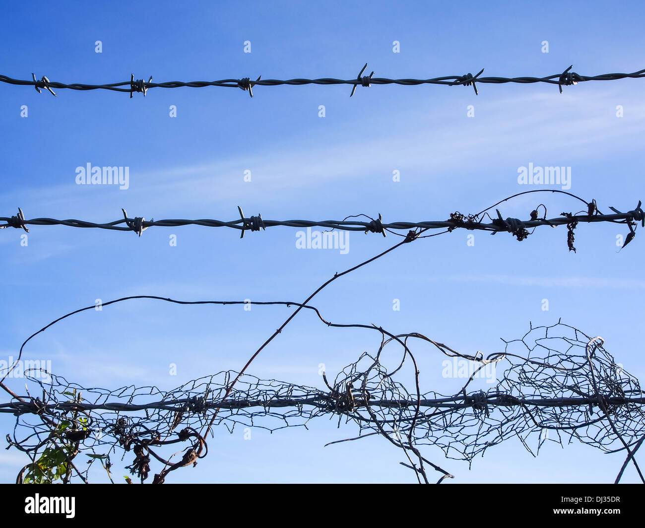 barbed wire against a blue sky - Stock Image