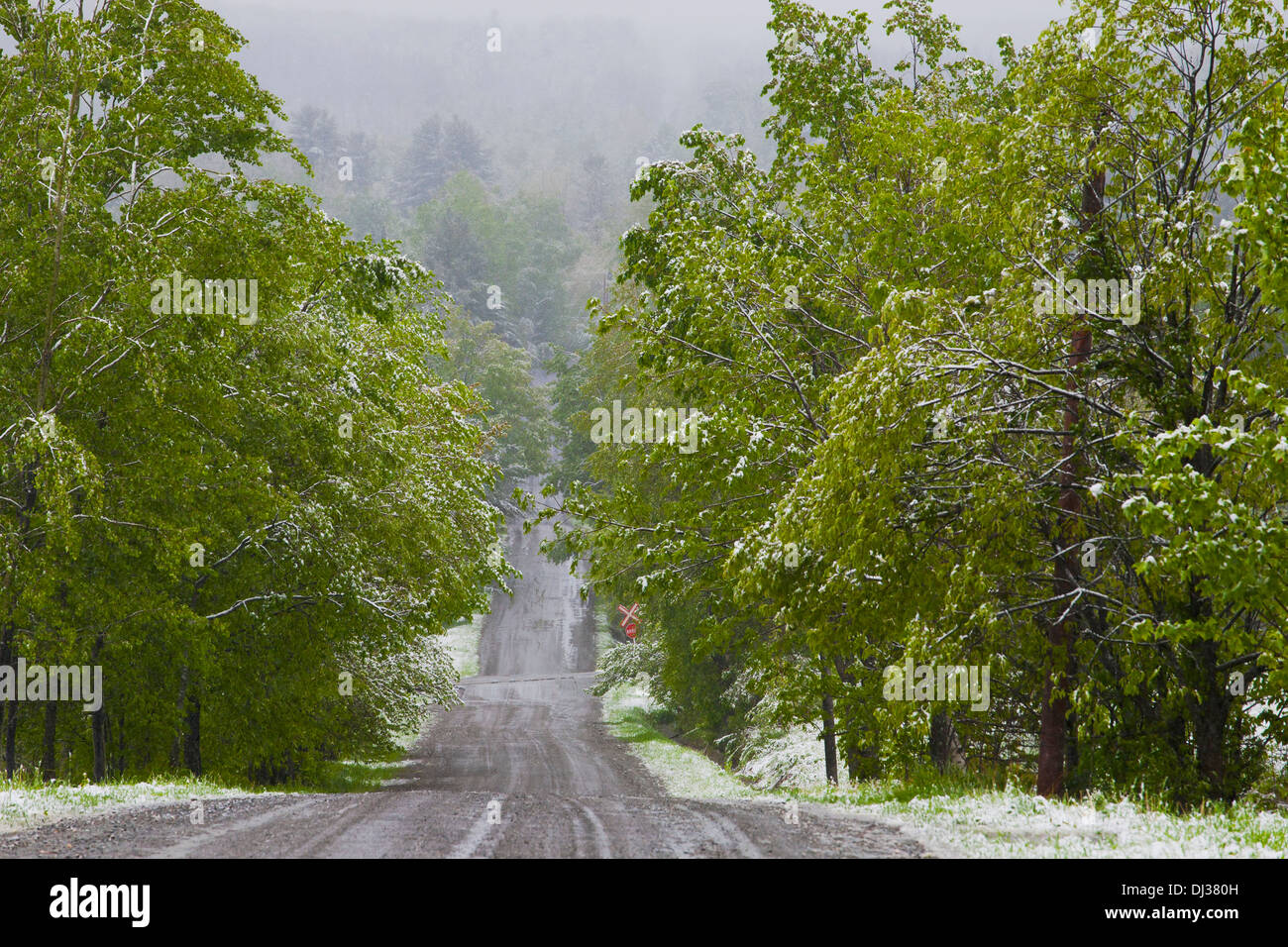 Late Spring Snowfall On A Road; Ville De Lac Brome, Quebec, Canada - Stock Image