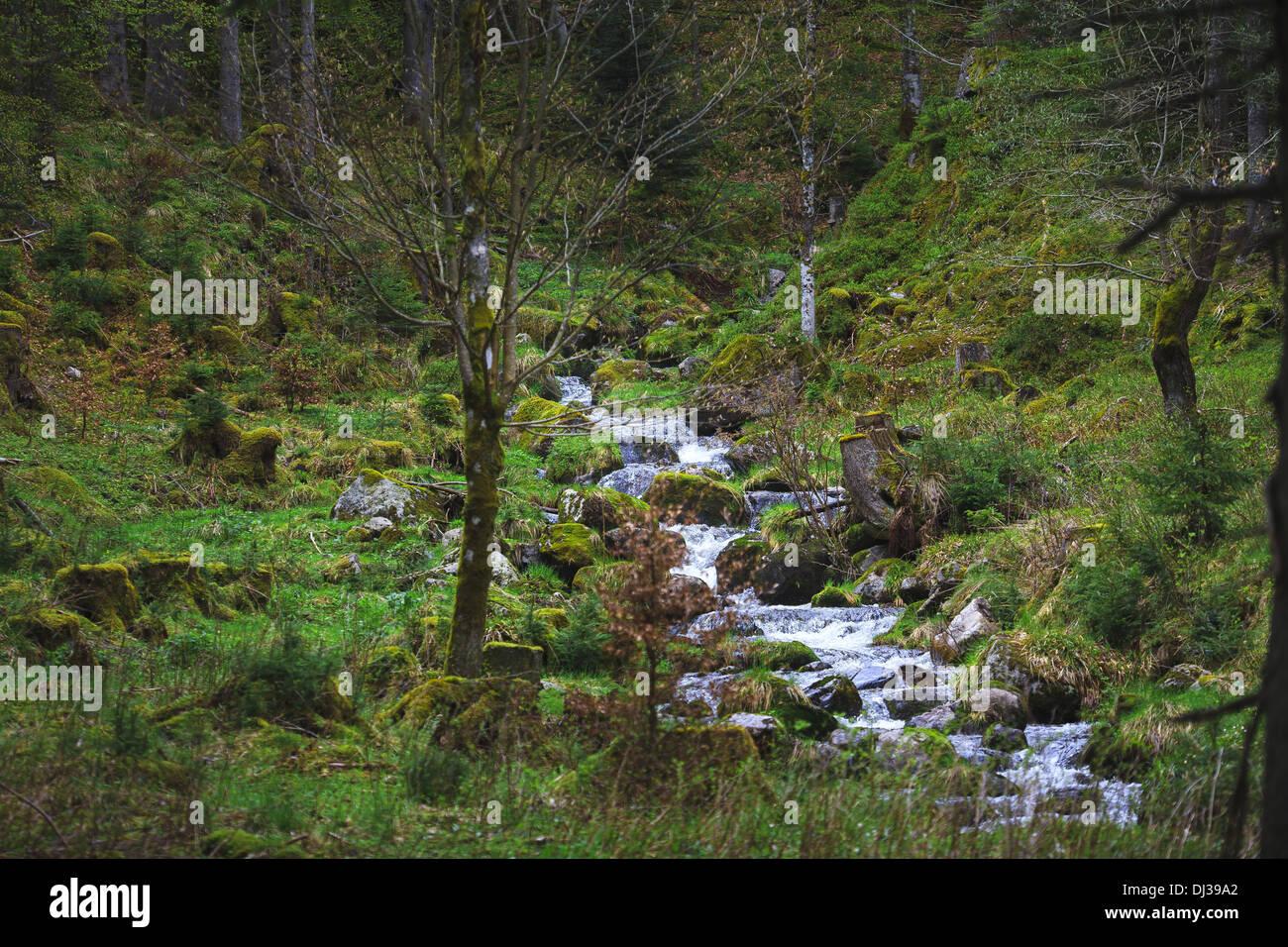 Stream 02 - Stock Image