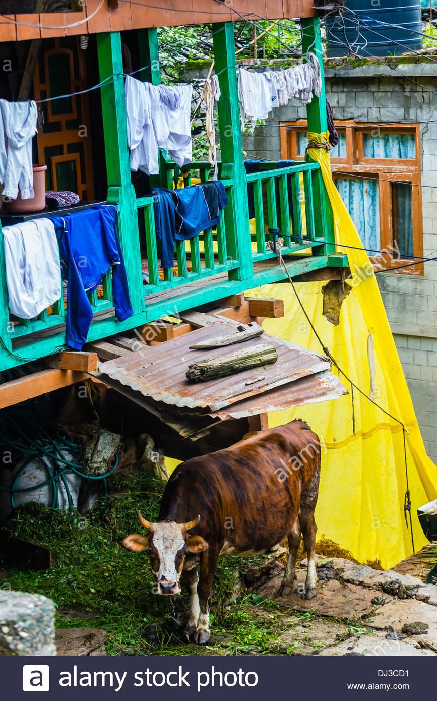 Old Manali, Himachal Pradesh, India. - Stock Image