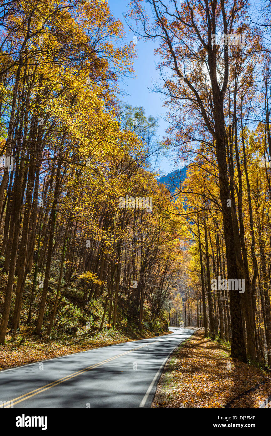 Newfound Gap Road through Great Smoky Mountains National Park in the fall, Tennessee, USA - Stock Image