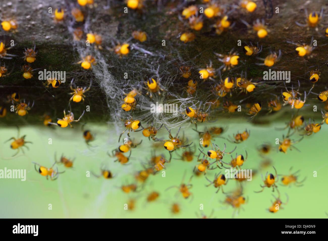 arachnids - Stock Image