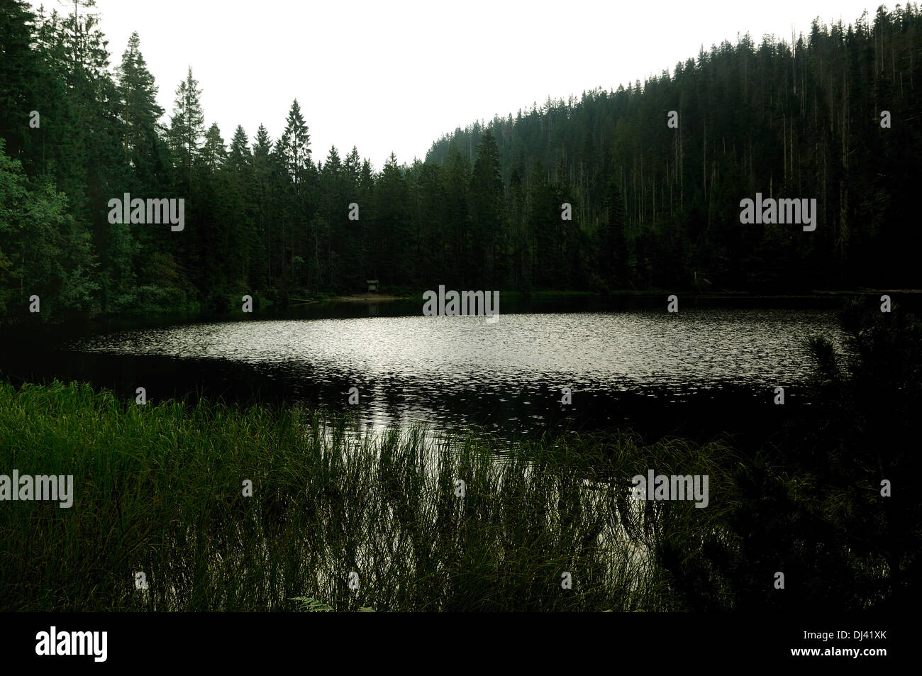 Wildsee Black Forest Germany Stock Photo