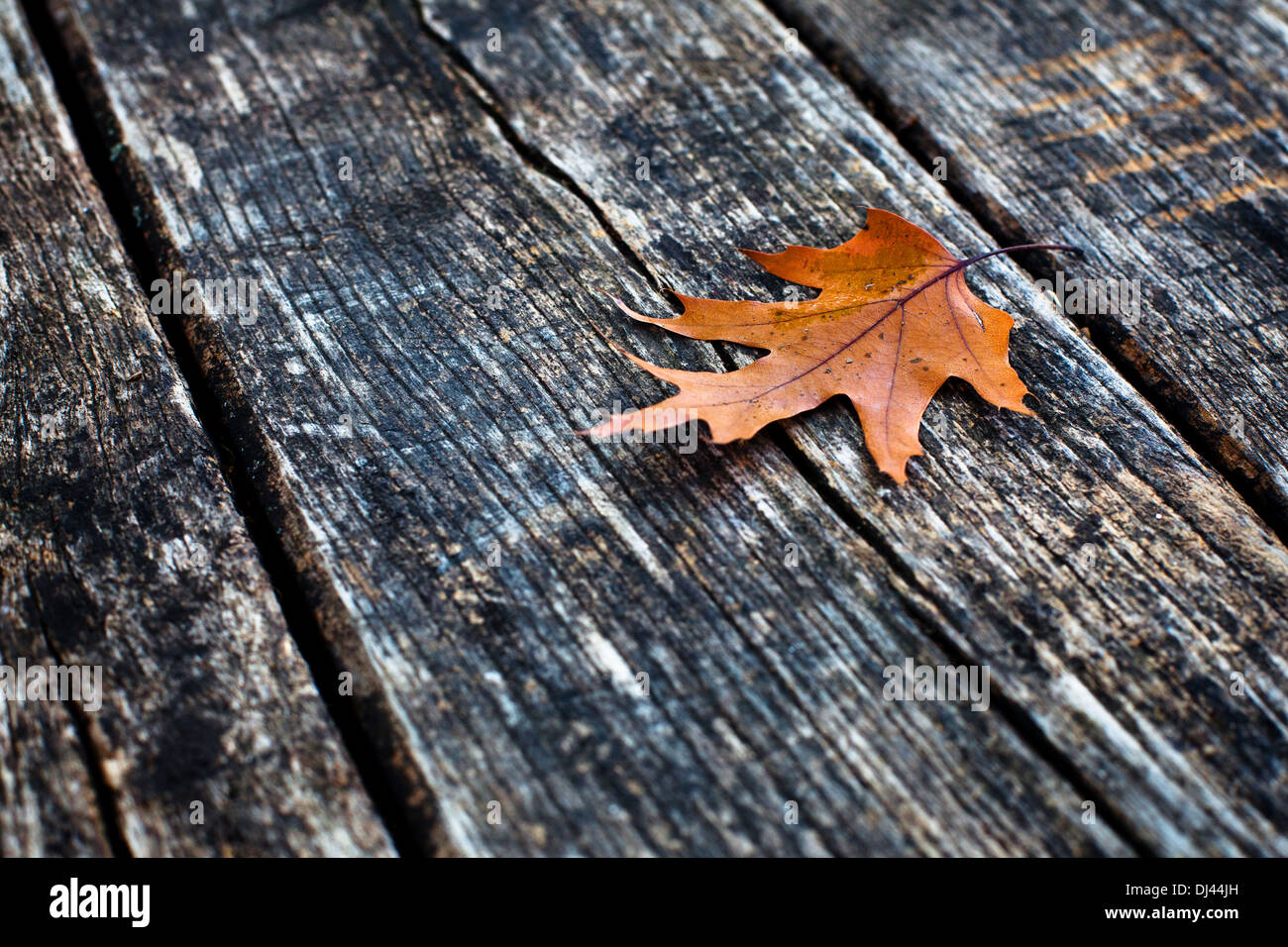autumn background - Stock Image
