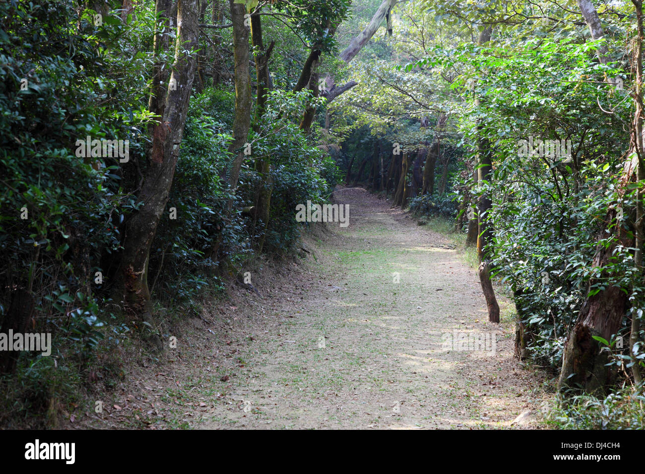 Trail in the forest of Lantau Island, Hong Kong - Stock Image
