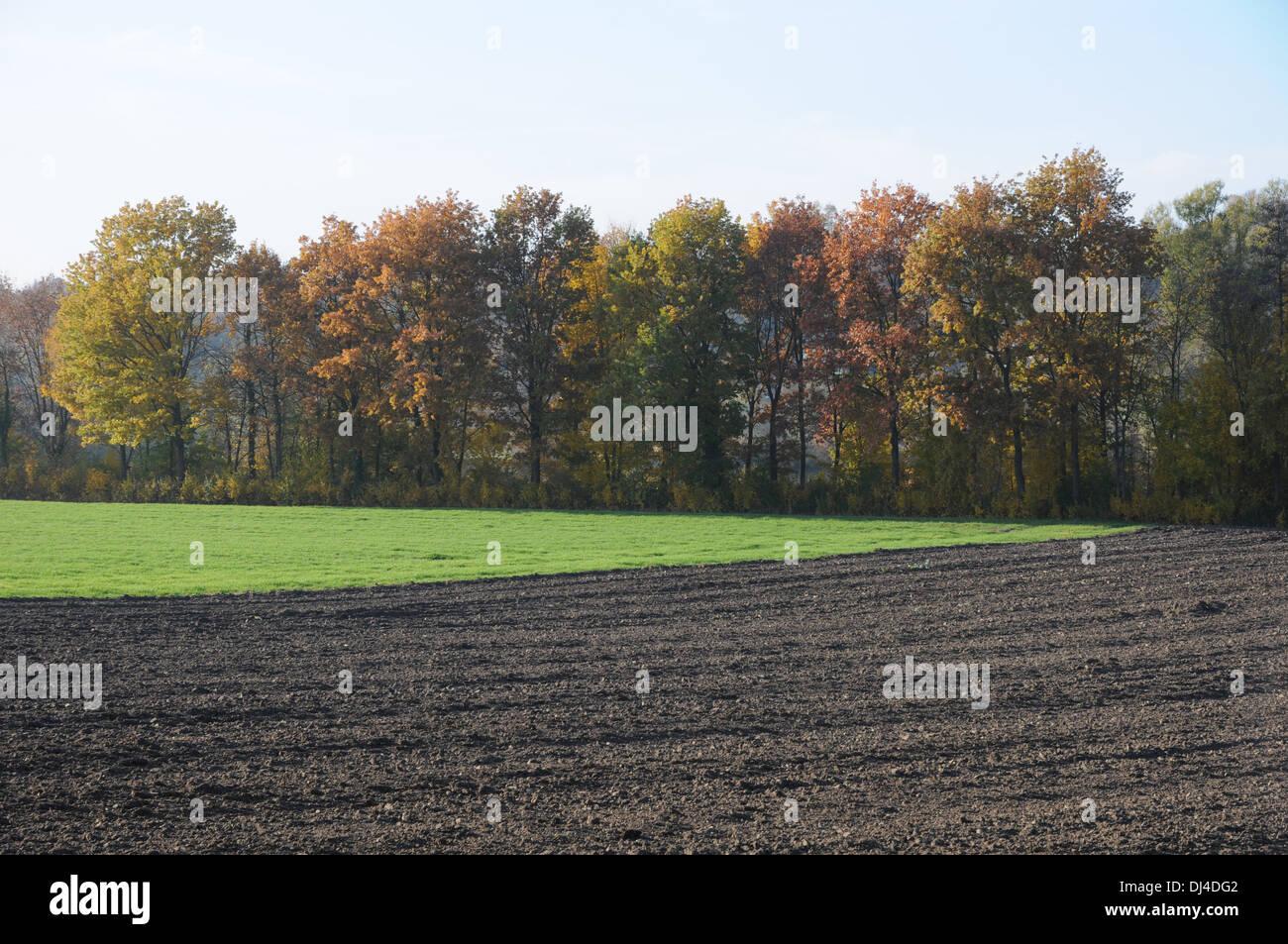 Field - Stock Image