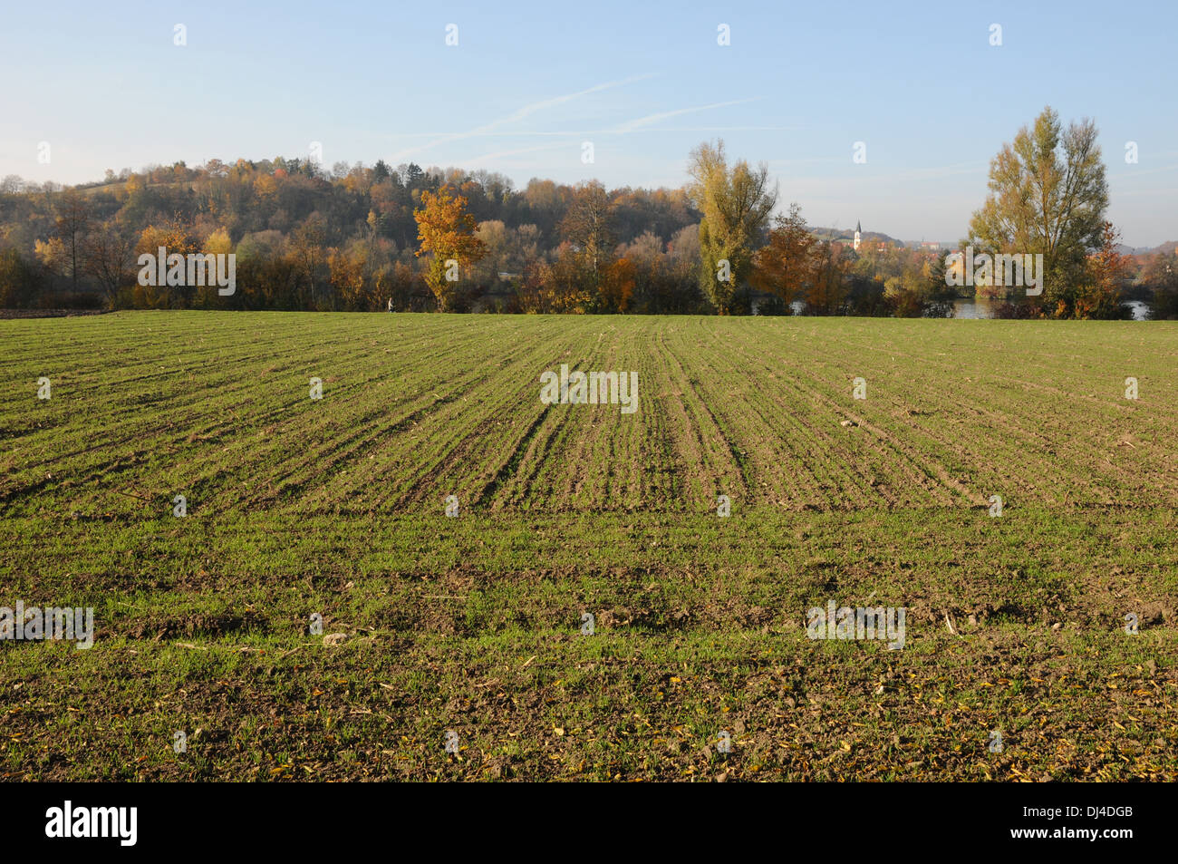 Wheat-Field - Stock Image