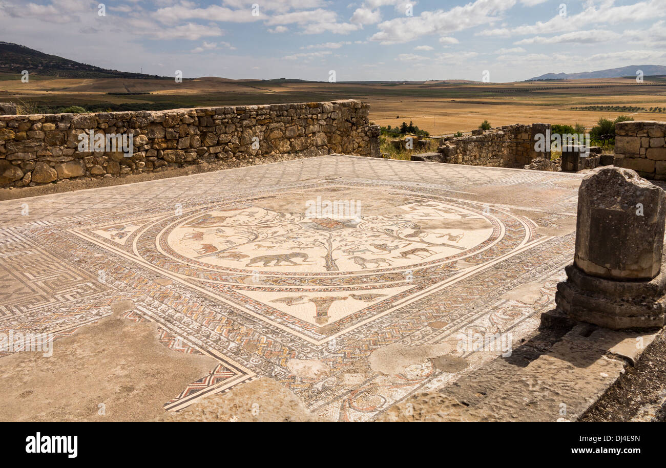 Mosaic floor at ancient Roman city of Volubilis, Meknes, Morocco - Stock Image