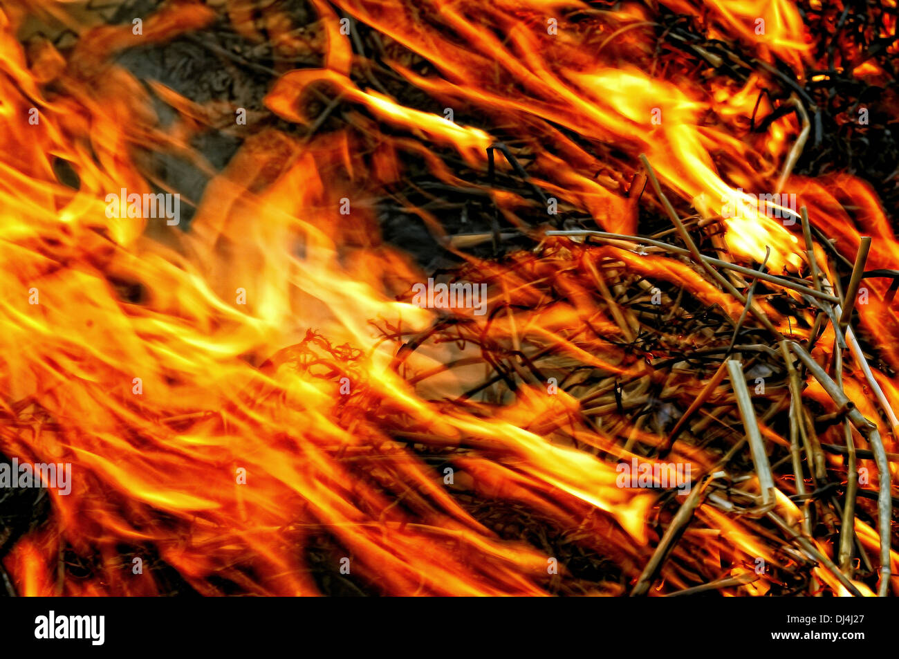 Midst of the fire - Stock Image