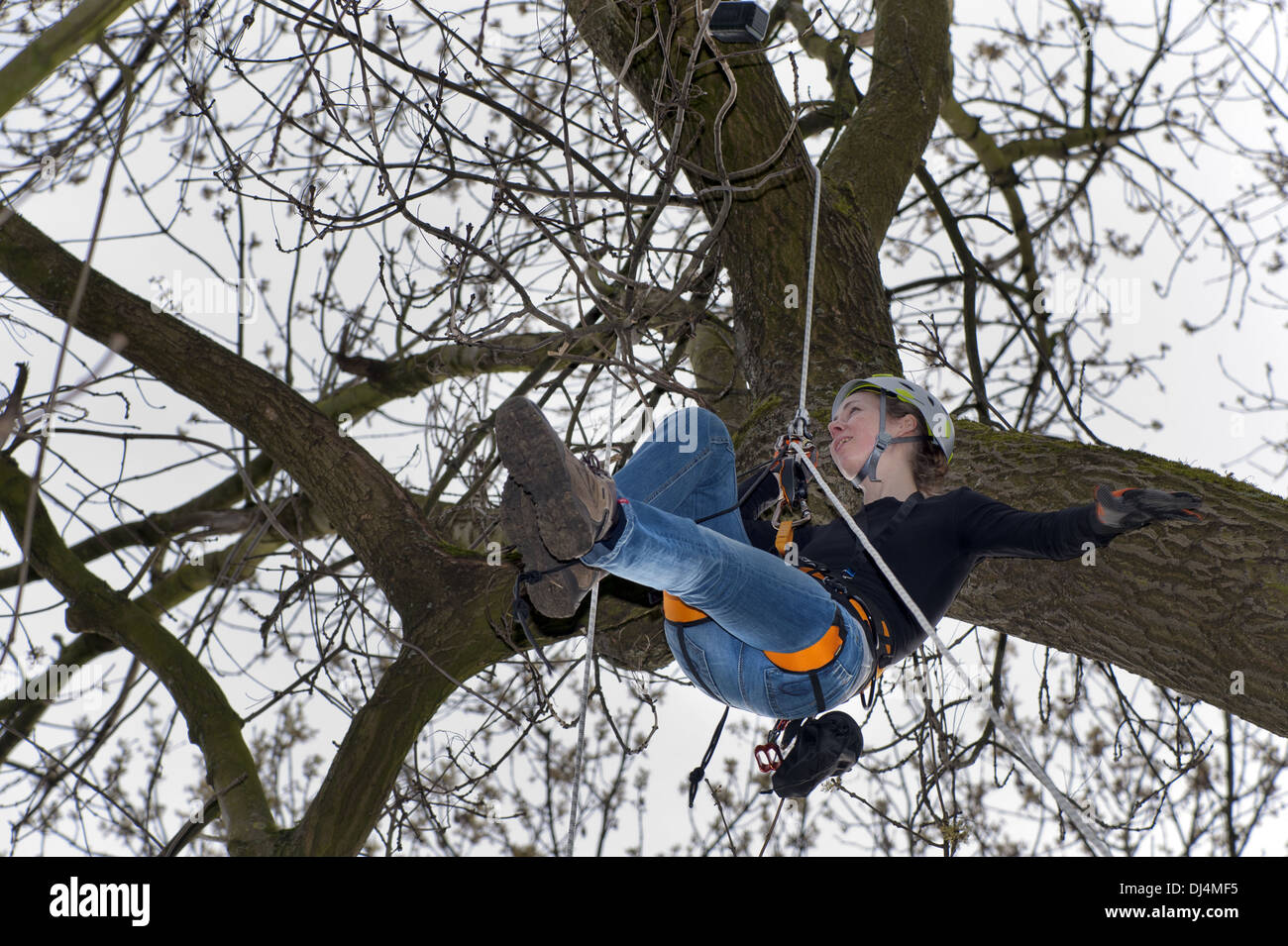 977bd0a28b9fc6 young woman when geocaching in a tree Stock Photo  62798825 - Alamy