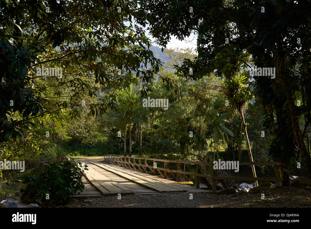 Wooden bridge in the Rainforest - Stock Image