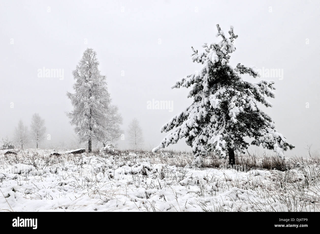 Fog Landscape with snow fall - Stock Image