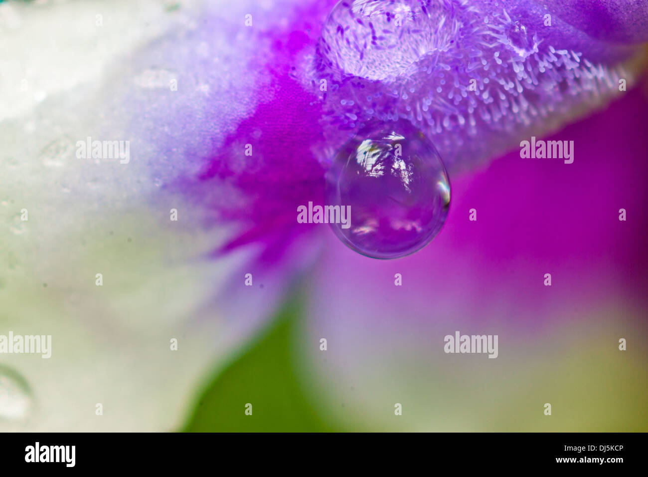 Flower with waterdrops Stock Photo