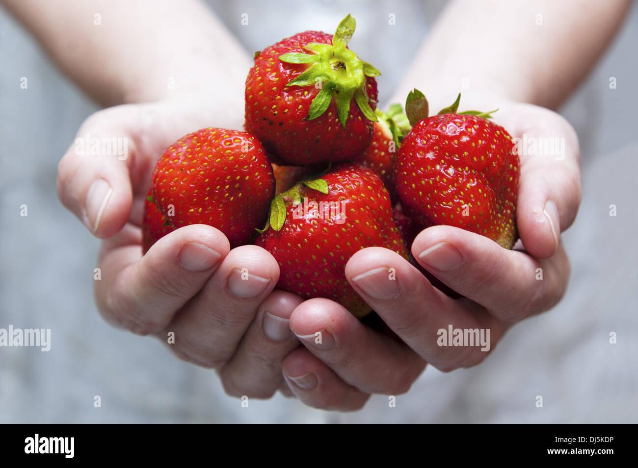 a handful of fresh strawberries Stock Photo