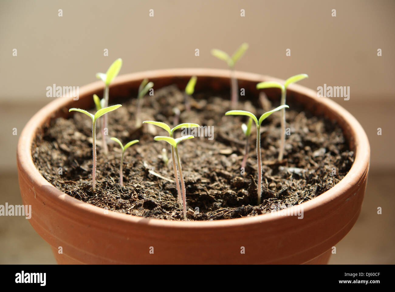 Tomaten Aussaen Stock Photos Tomaten Aussaen Stock Images Alamy