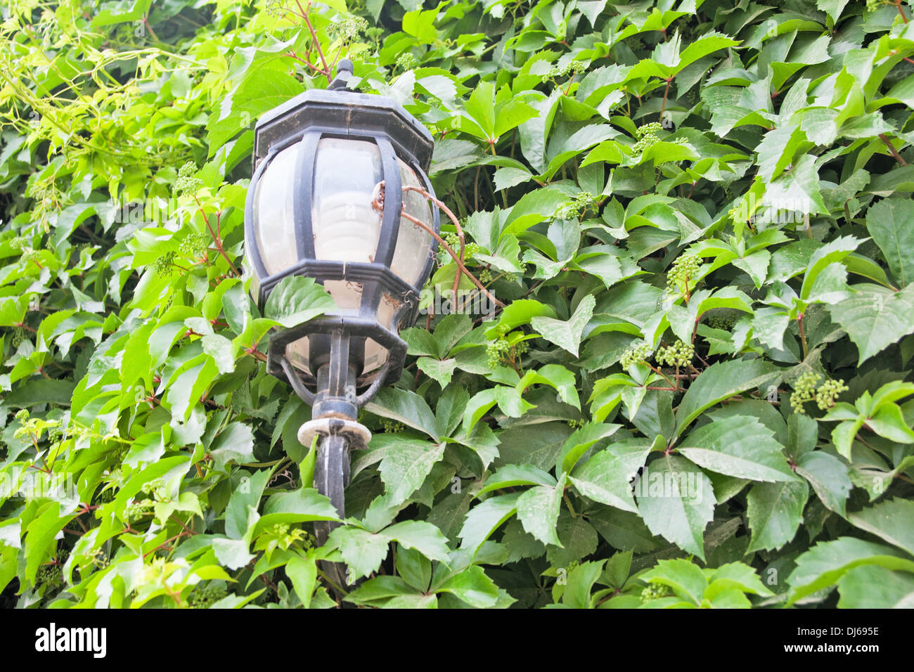 View of a green street lamp and a green leaf - Stock Image