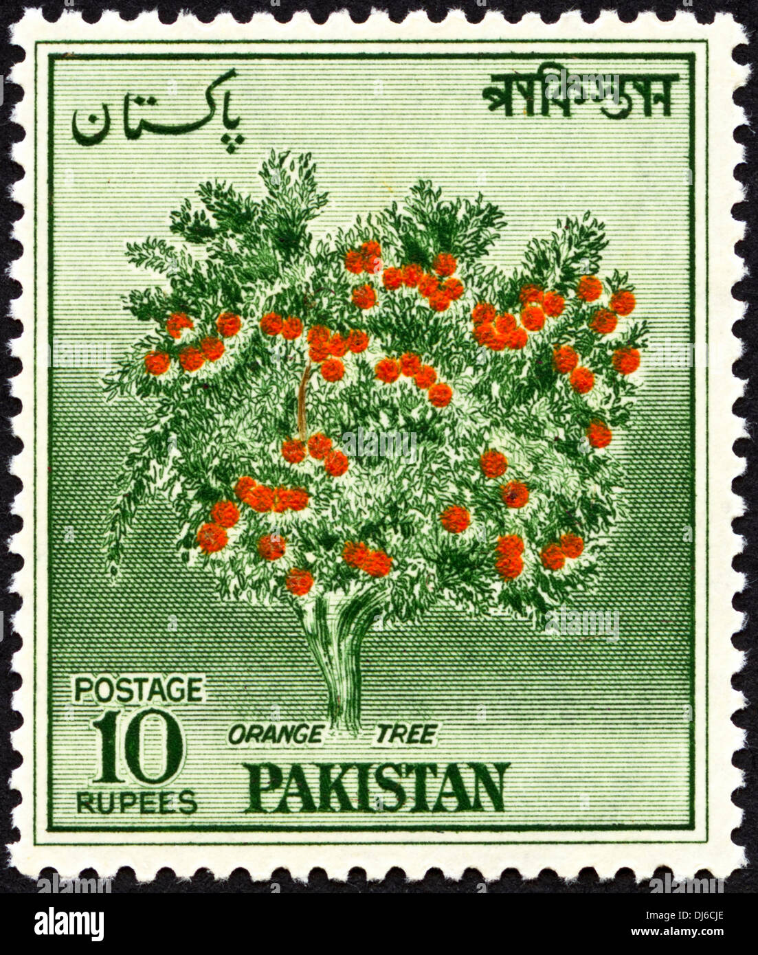 postage stamp Pakistan 10 Rupees featuring Orange Tree dated 1967 - Stock Image