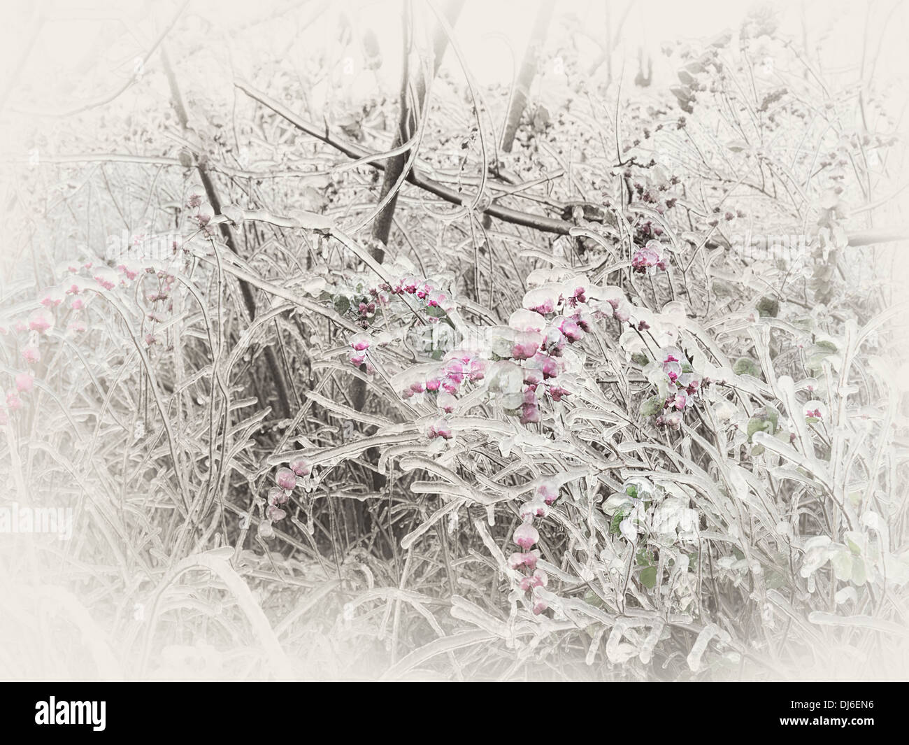 Frozen, ice glazed branches and pink berries of a shrub. Abstract sepia toned fall nature scenery. - Stock Image