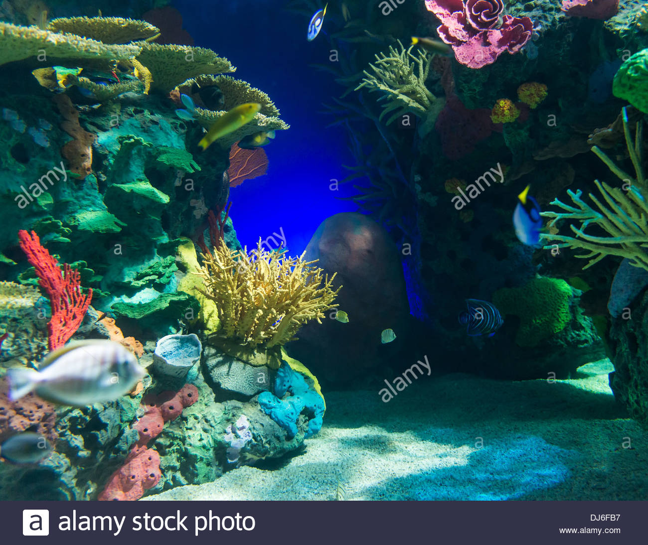 Different images or photos of the underwater or undersea natural paradise Stock Photo