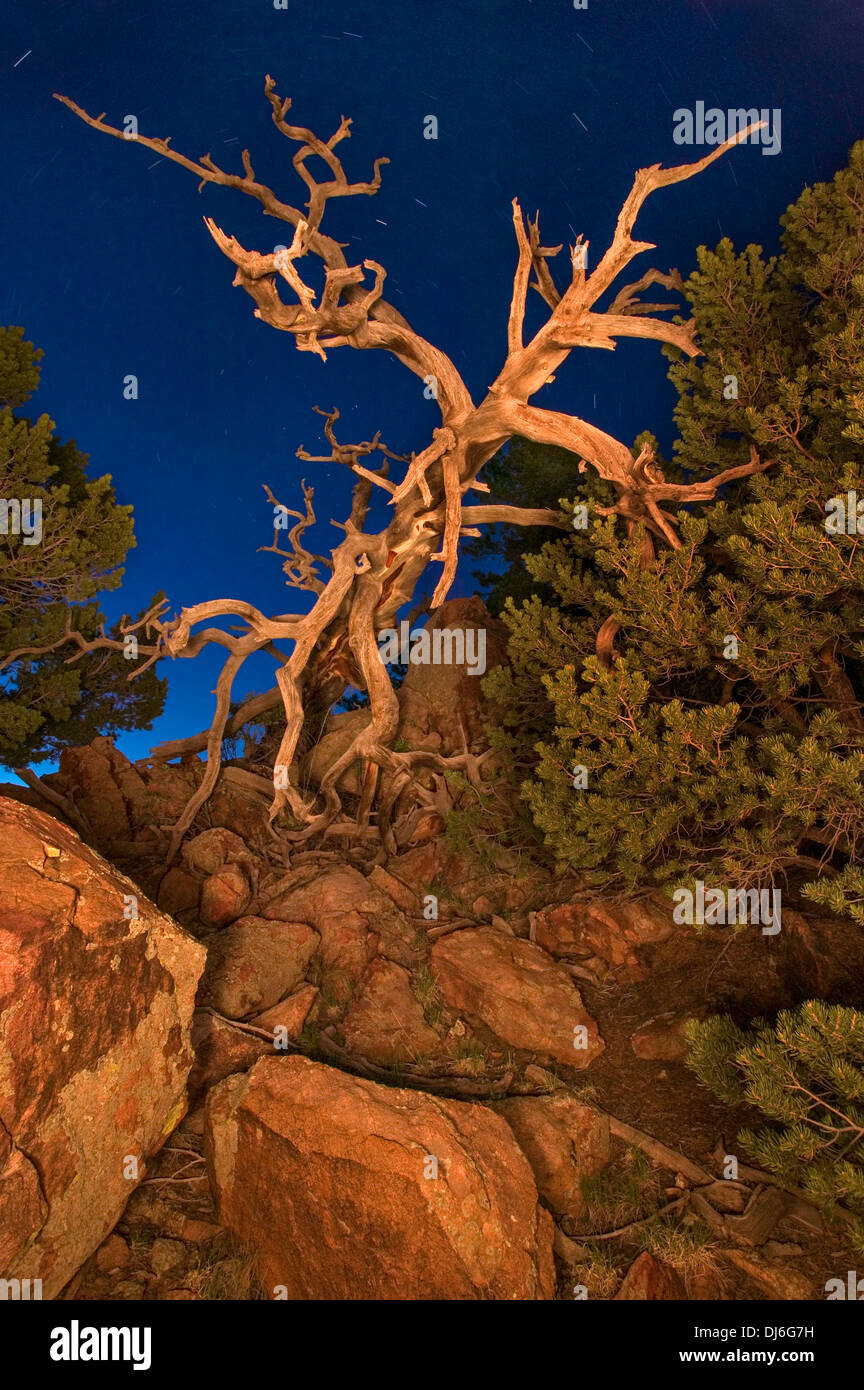 Fallen tree at night in the Colorado mountains - Stock Image