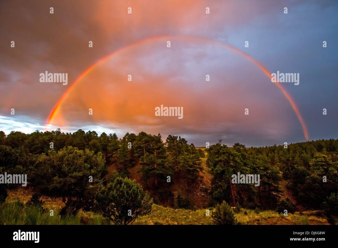 Rainbow over pine trees - Stock Image