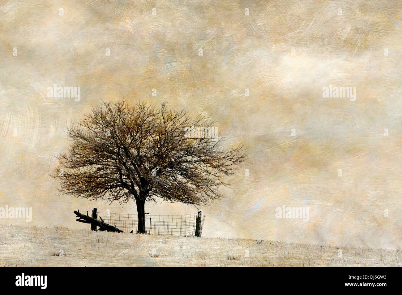 Textured Tree and Fence in Stark Winter Landscape in Washington County, Indiana - Stock Image
