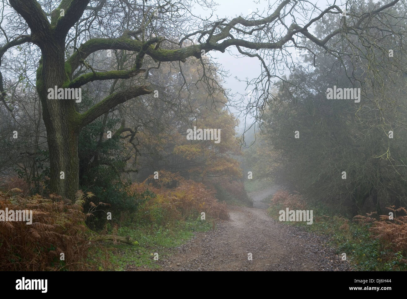 A footpath disappears into the distant fog on the Malvern Hills between Hangman's Hill and Swinyard Hill. Stock Photo