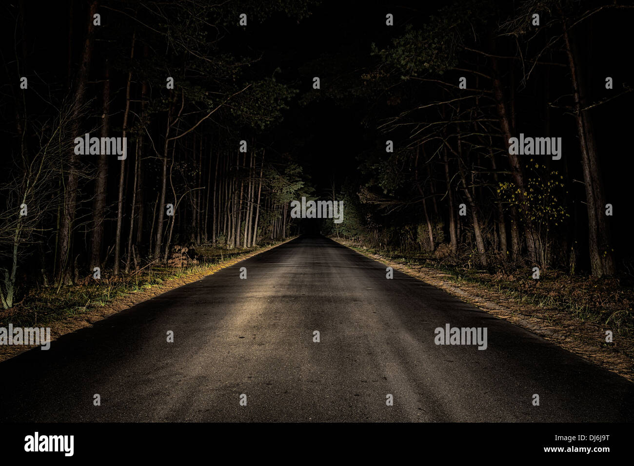 Night Road on dark forest. - Stock Image