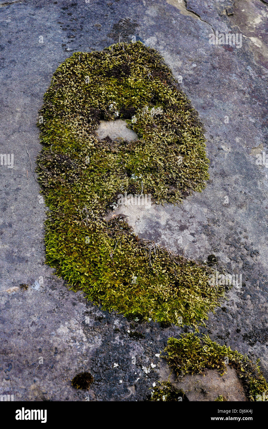 the letter e formed by moss on rock - Stock Image