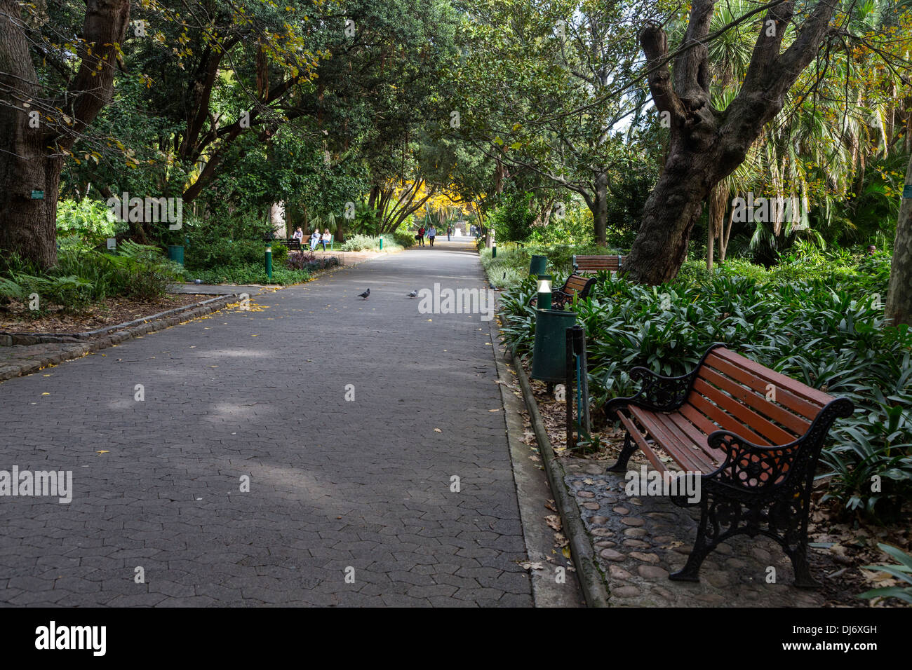South Africa, Cape Town. Government Avenue through The Company's Garden, established by the Dutch East India Company in 1652. - Stock Image