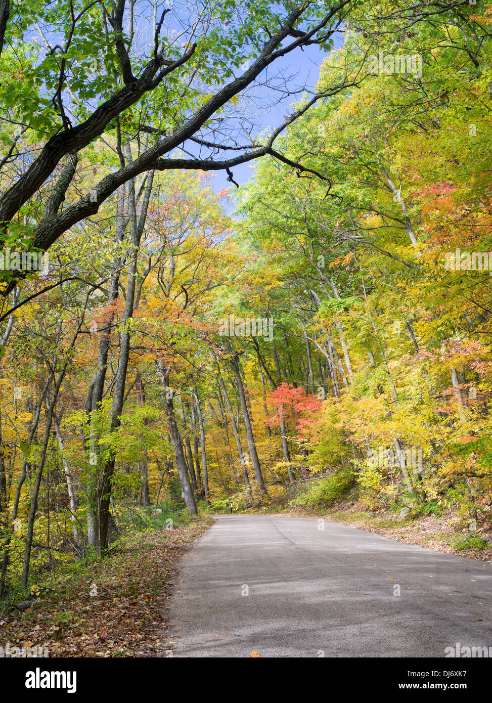 Trees turn color along a road in Devil's Lake State Park, near Baraboo, Sauk County, Wisconsin - Stock Image