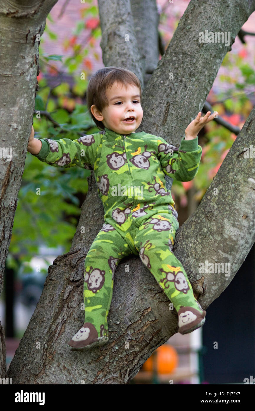 Toddler Sitting in Maple Tree - Stock Image