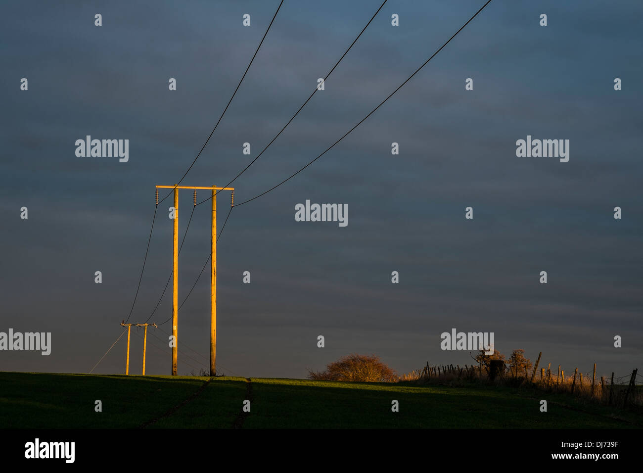 Electricity cables and pylons highlighted in autumn sunlight. - Stock Image