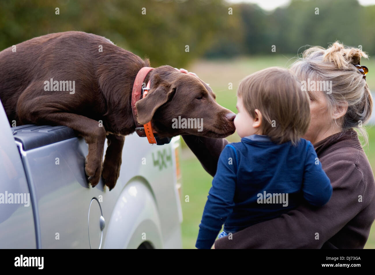 Labrador Retriever Greeting Young Boy being Held in Grandmothers Arms - Stock Image