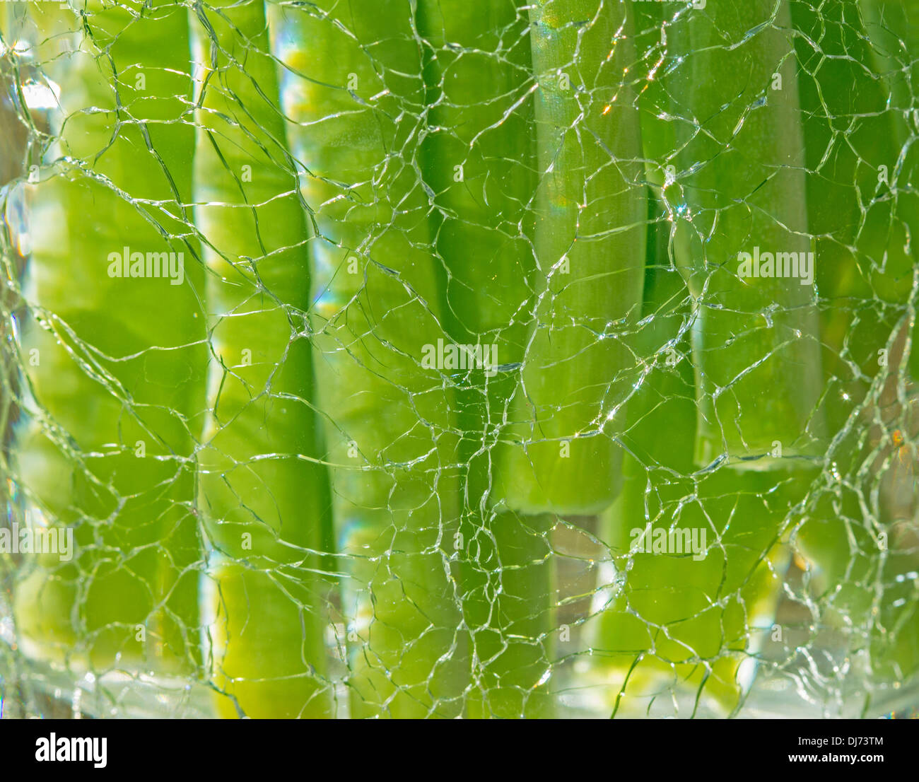 Flower stems in water behind in vase made from cracked glass. - Stock Image